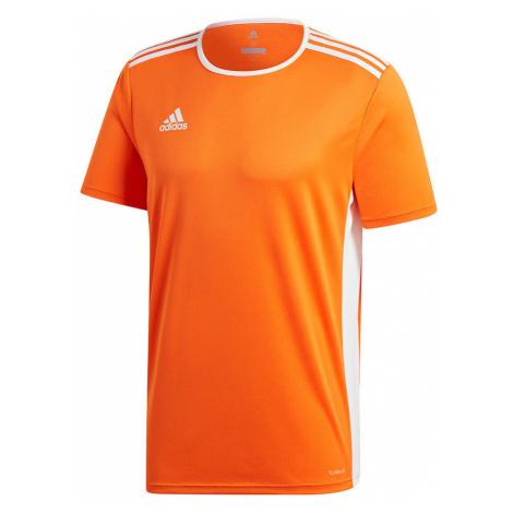 Koszulka adidas Entra M CD8366